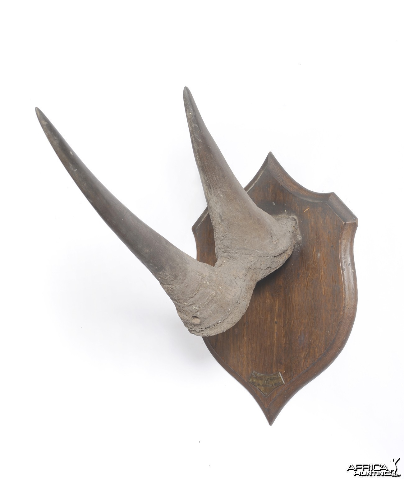 White Rhinoceros Horns