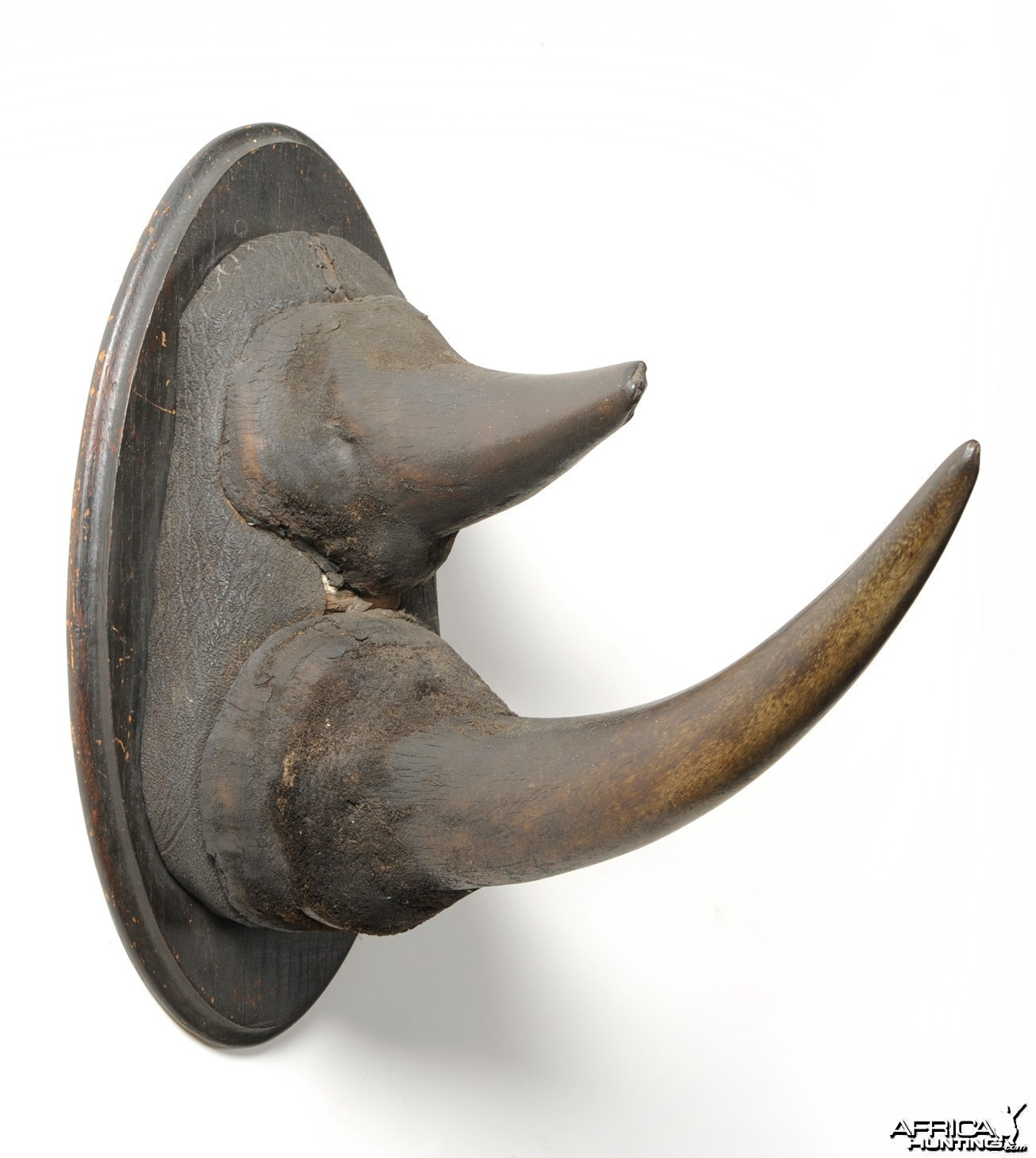 Black Rhinoceros Horns