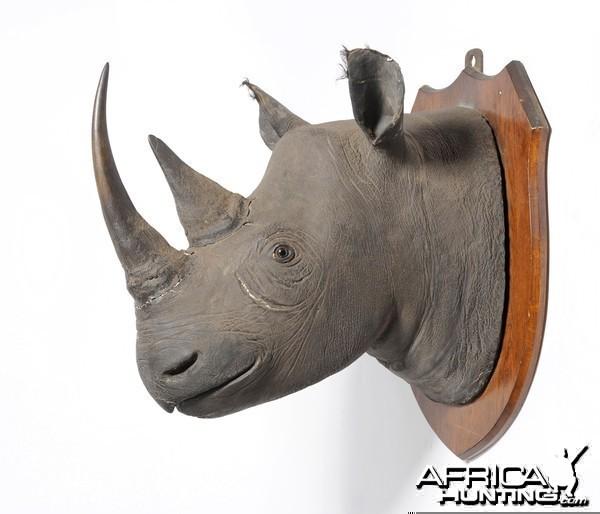 Black Rhinoceros Taxidermy Mount Hunting