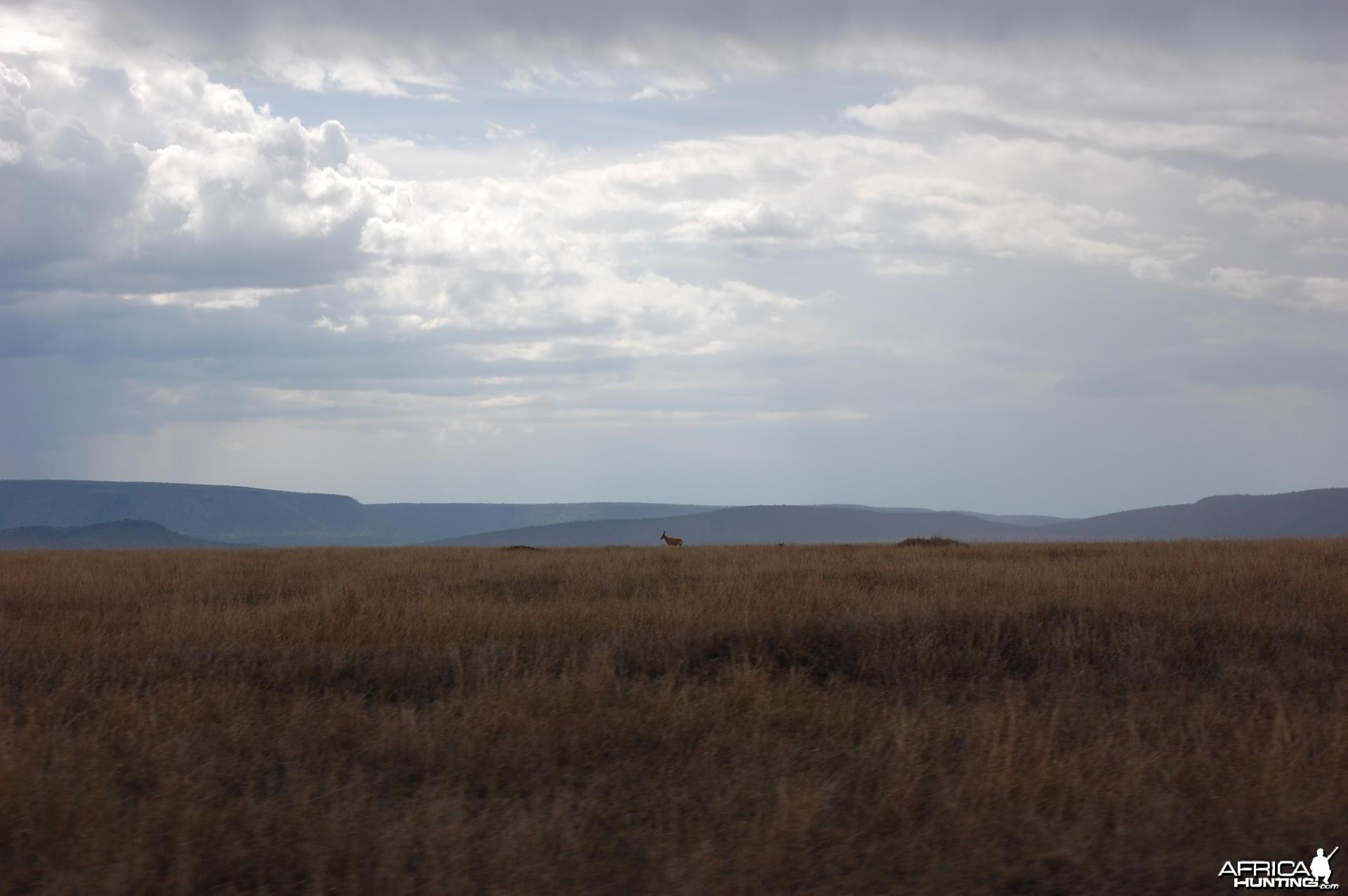 Plain Tanzania