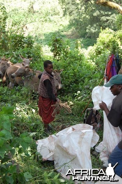 Getting the Buffalo Meat Tanzania