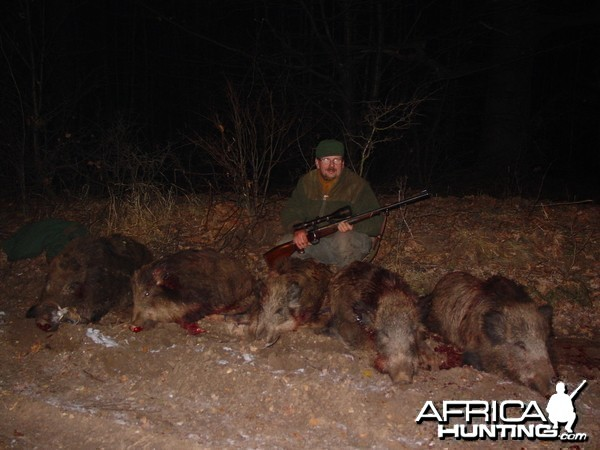 Hunting Wild Boars