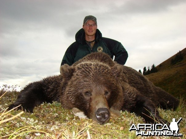 Hunting Grizzly Bear
