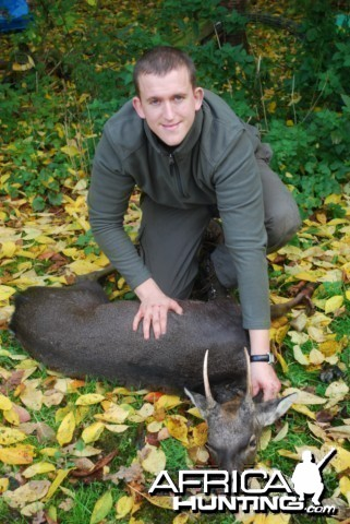 Hunting Sika Stag