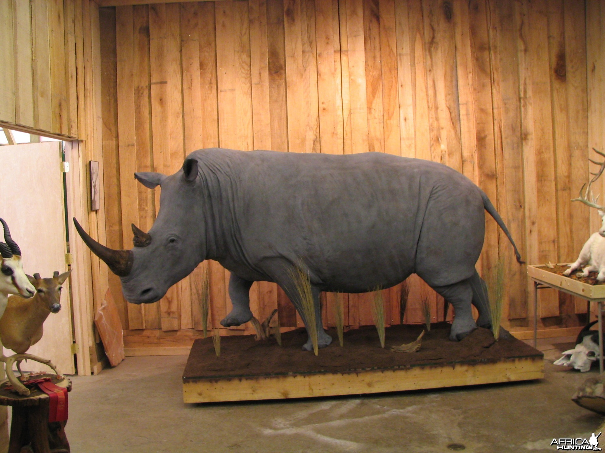 Rhino Taxidermy Mount