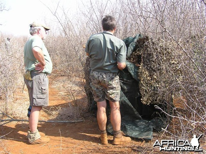 My Leopard Hunt with Motsomi Safaris in South Africa
