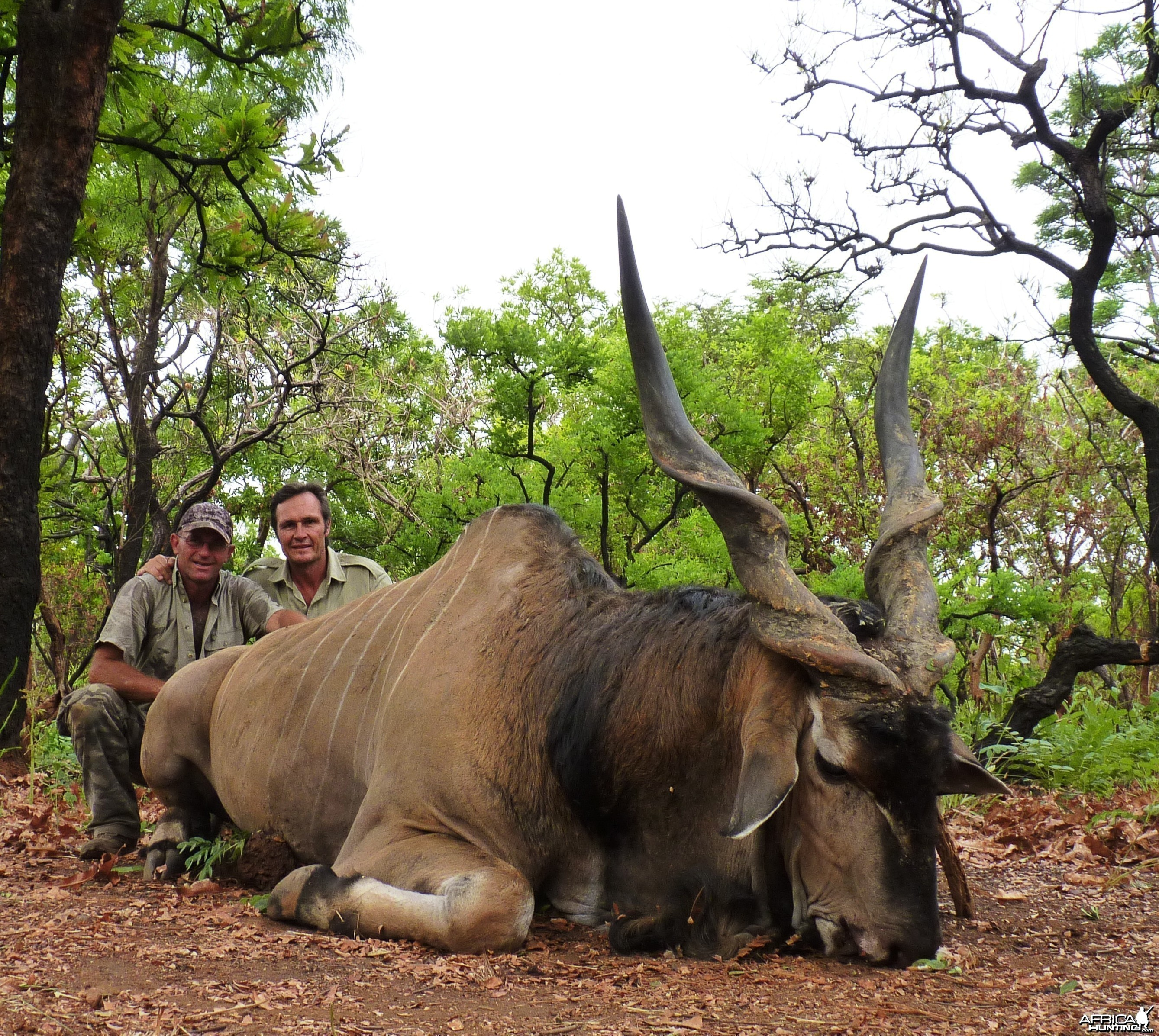 52 inch Lord Derby Eland hunted in CAR