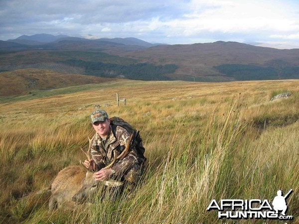Red Stag, Scotland 2005