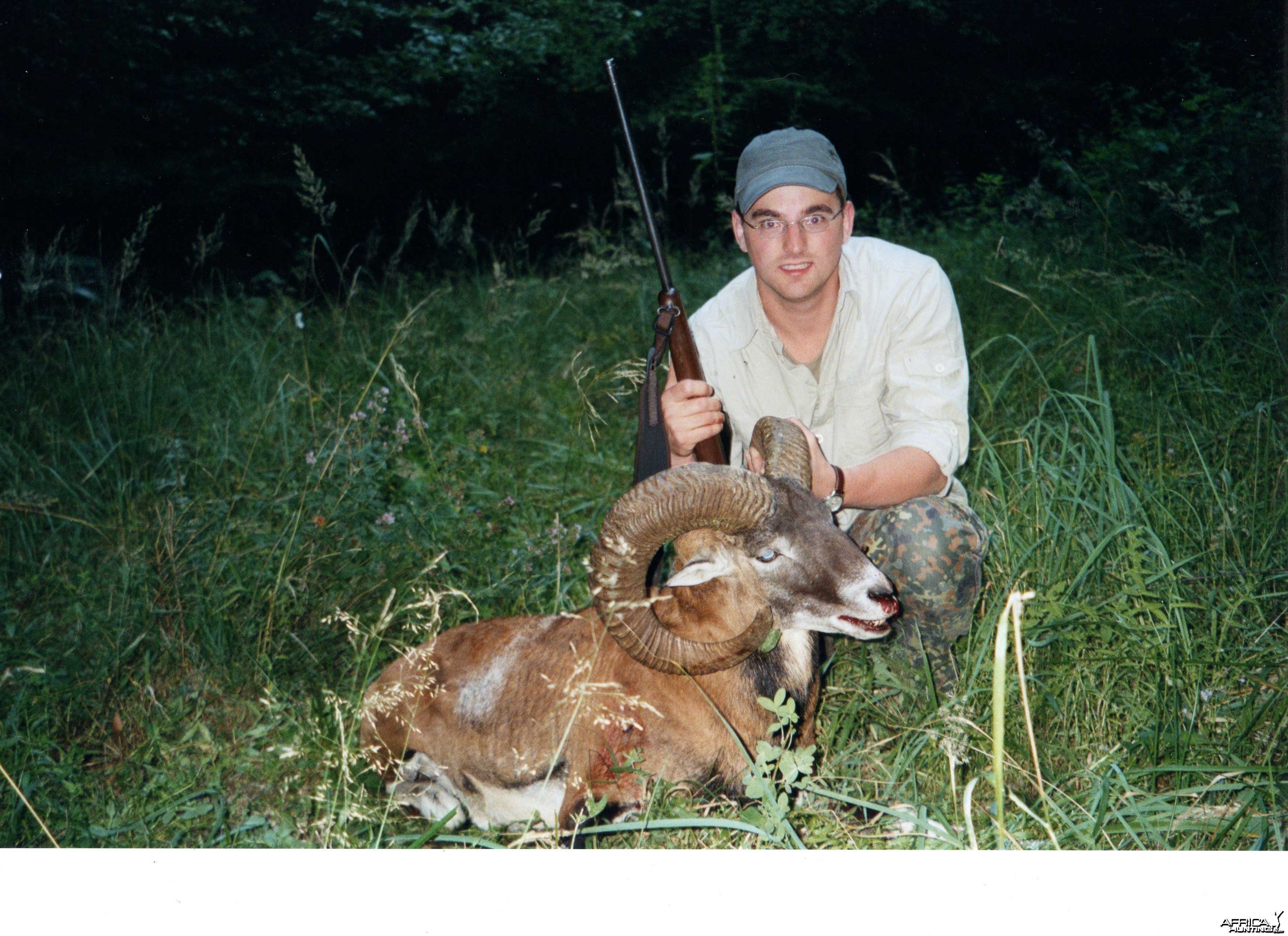 Mouflon sheep, Germany 2005
