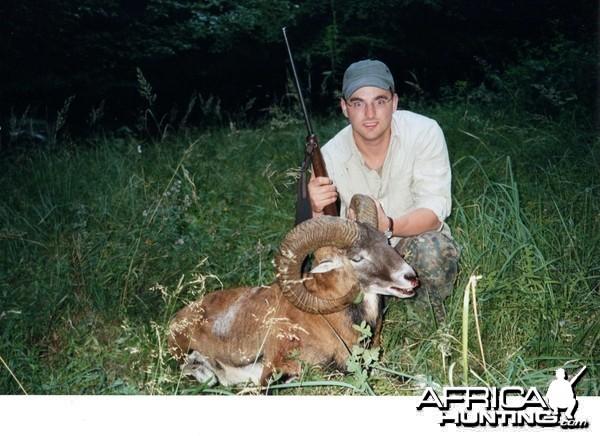 Mouflon sheep, Germany 2005
