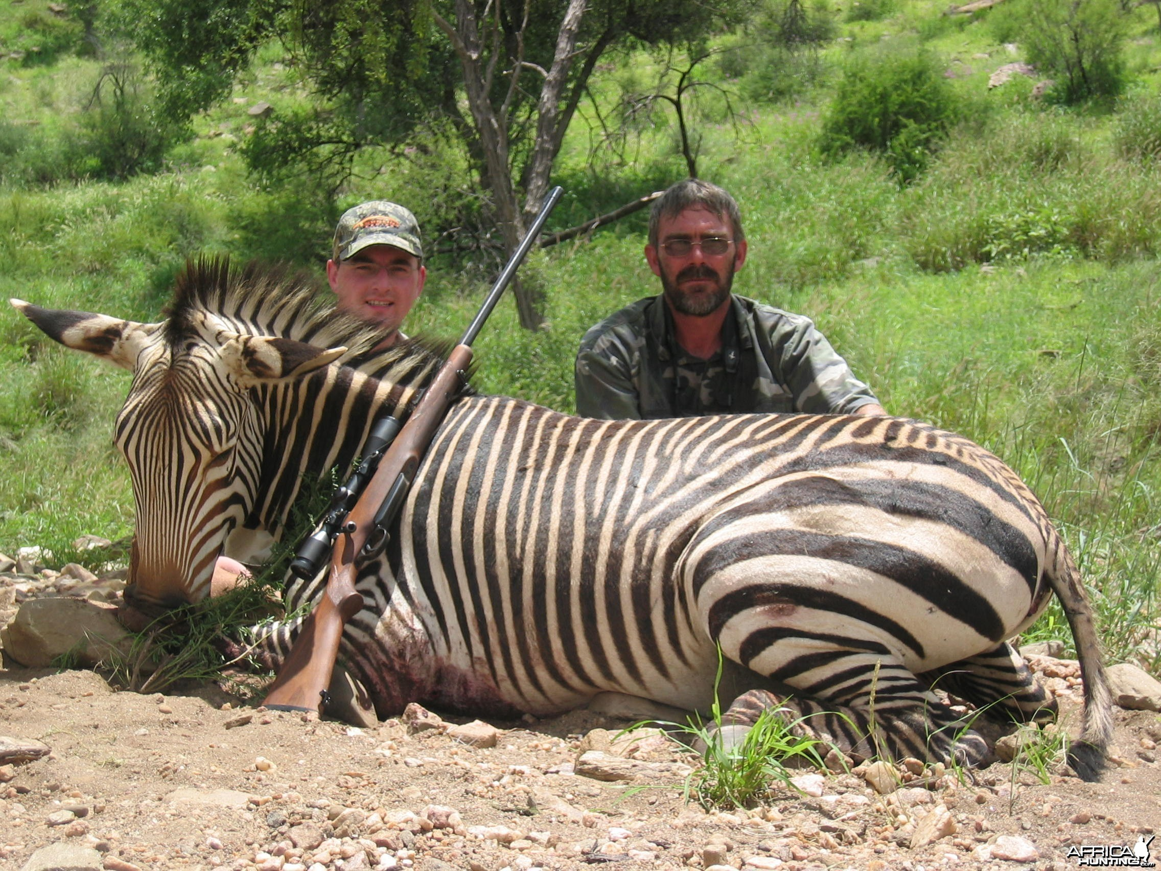 Mountain zebra, Namibia 2006