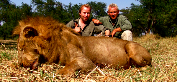 Good lion from Zambia
