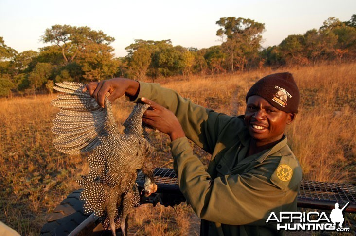 Hunting Guineafowl