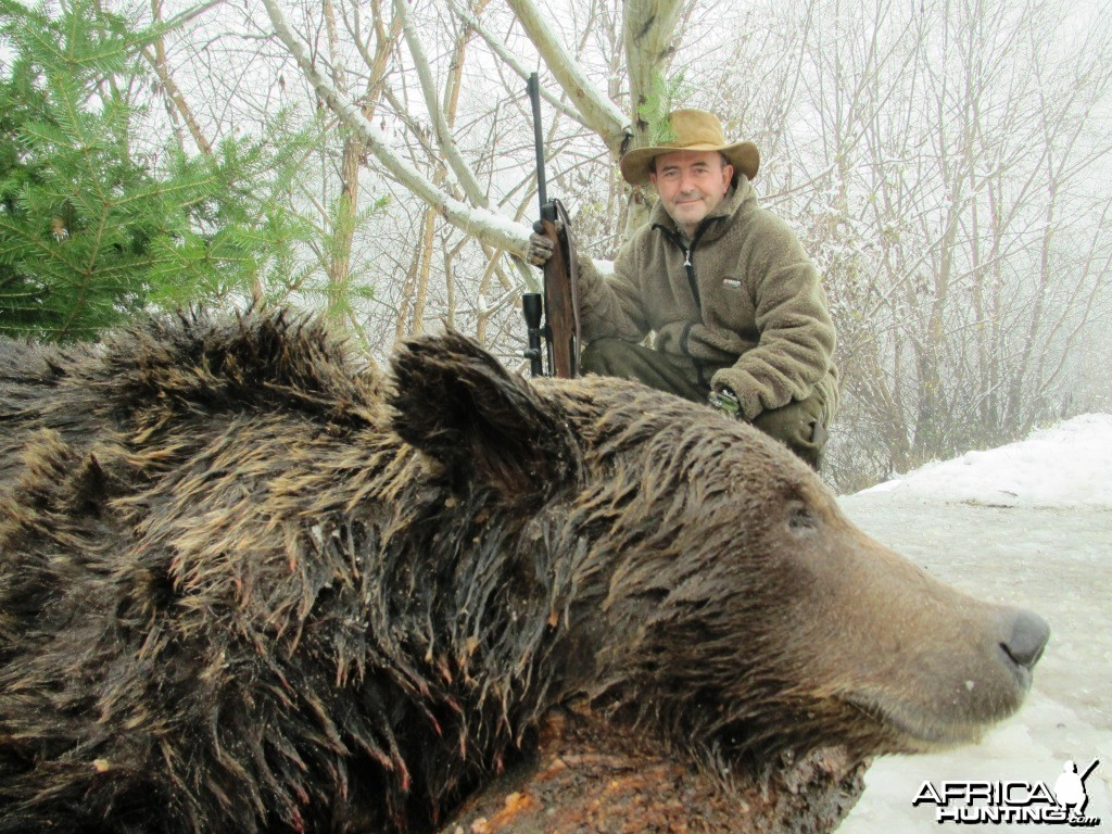 Brown Bear Hunt in Romania