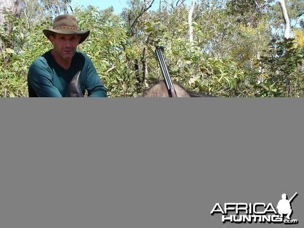 Hunt Australia Buffalo