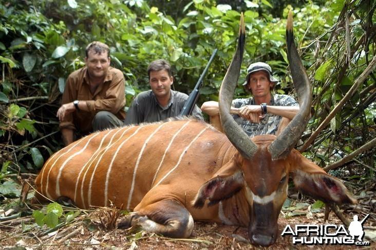 Hunting Bongo