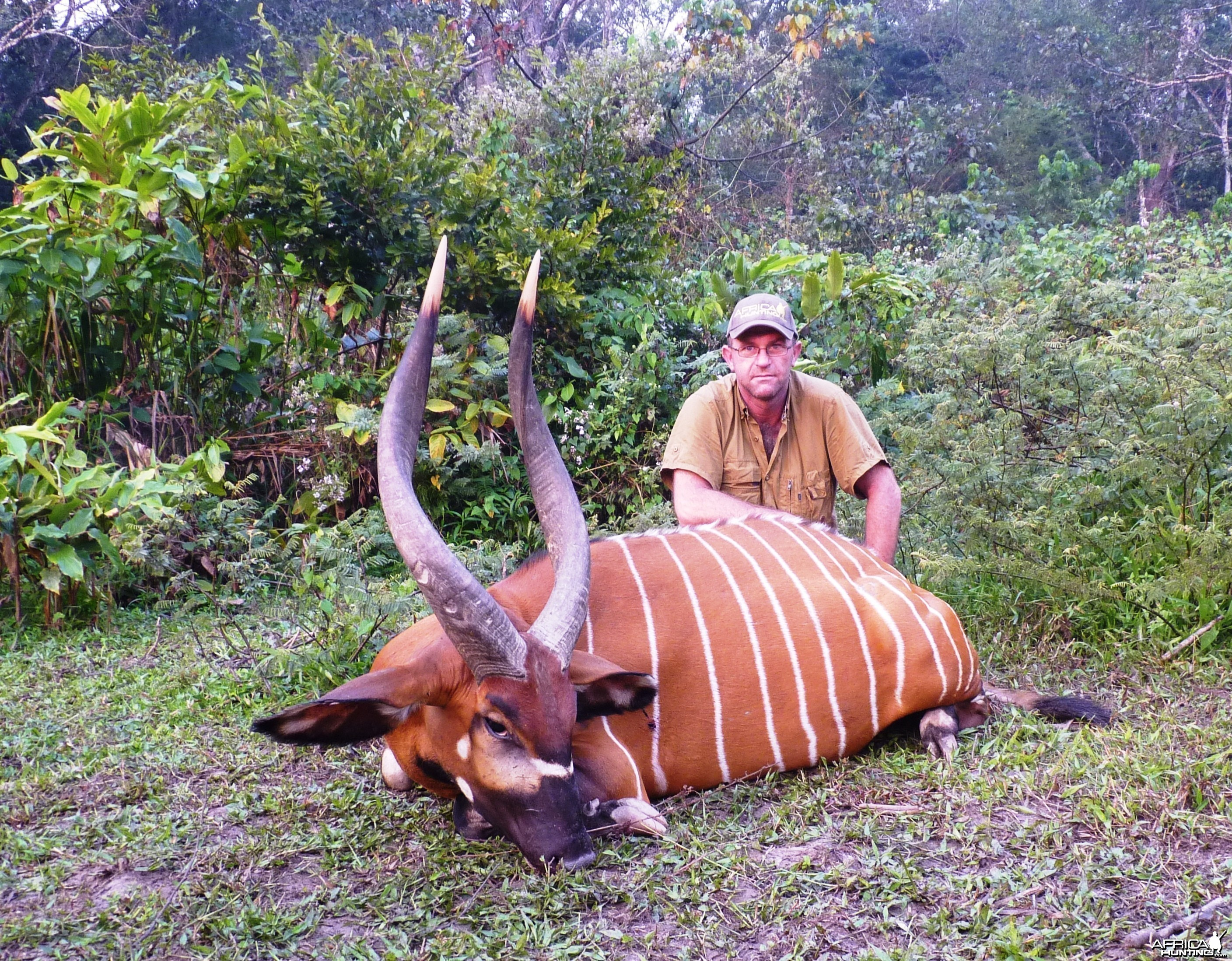 Hunting Bongo in CAR