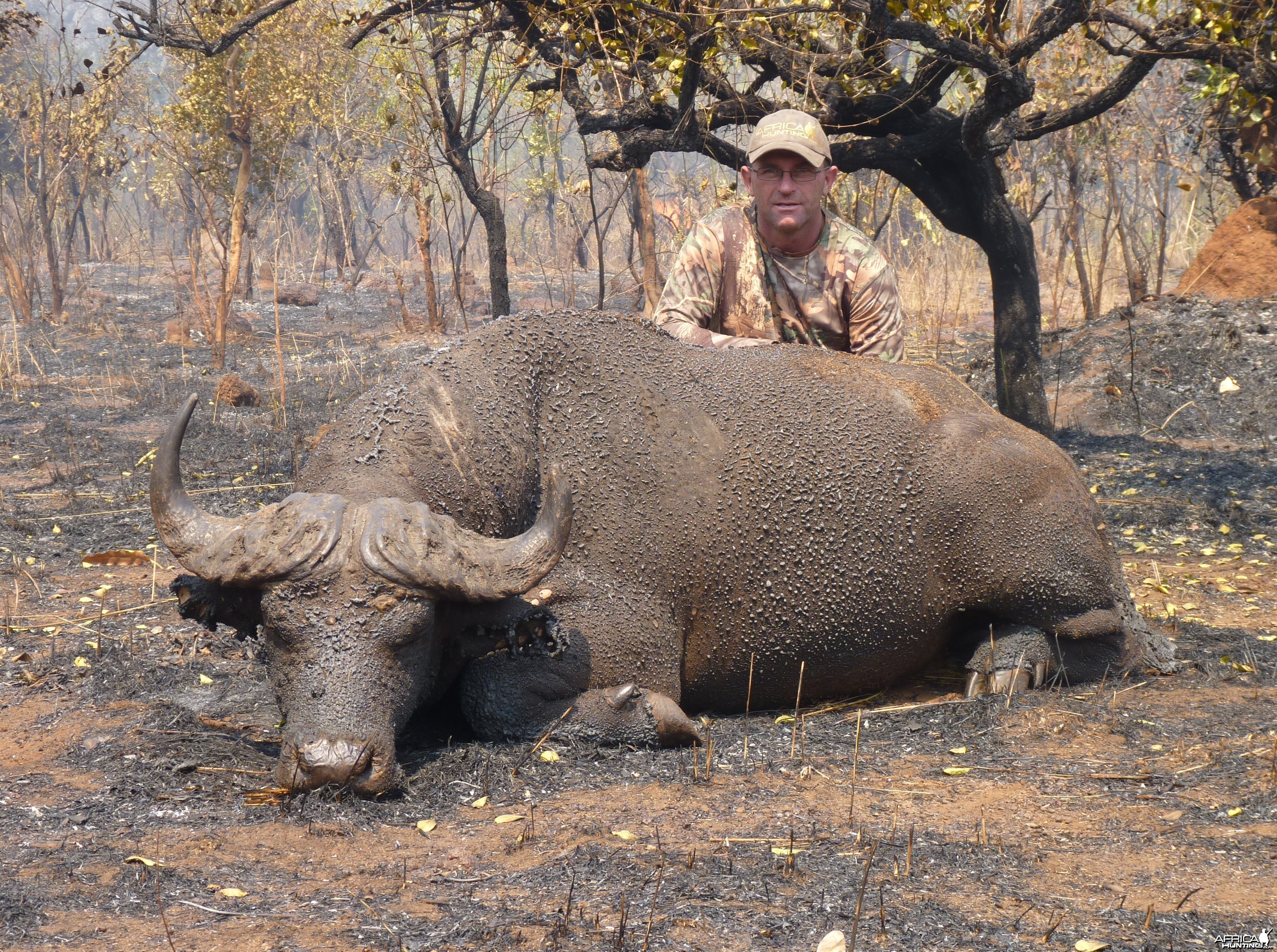 Buffalo hunted in Central African Republic