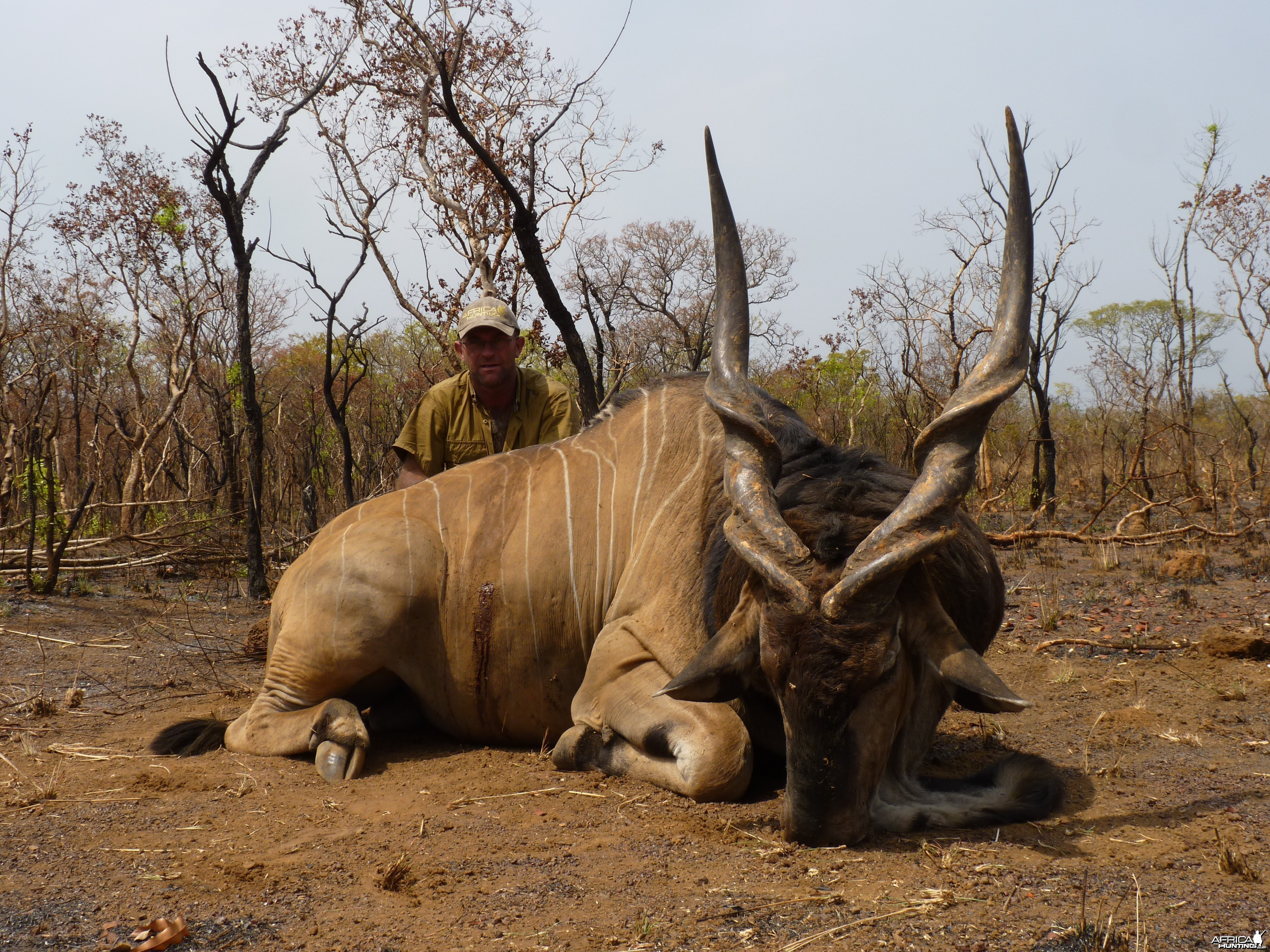 Lord Derby Eland hunted in Central African Republic