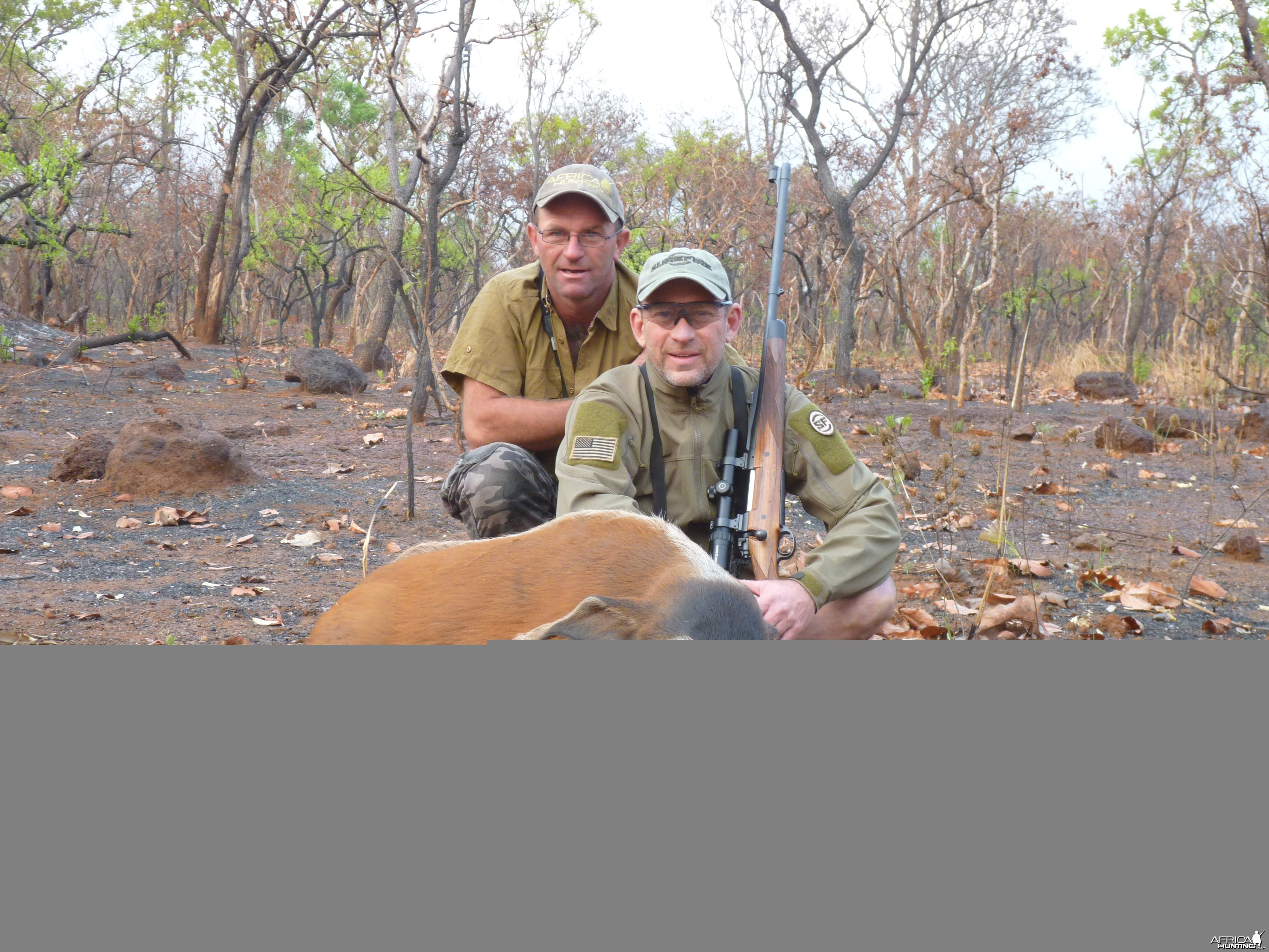 Hunting Red River Hog in Central African Republic