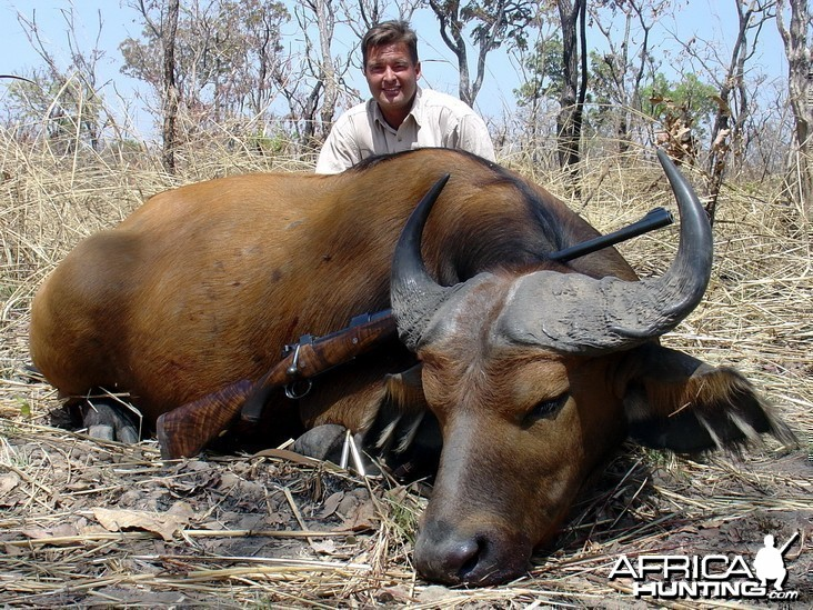 Hunting West African Savannah Buffalo