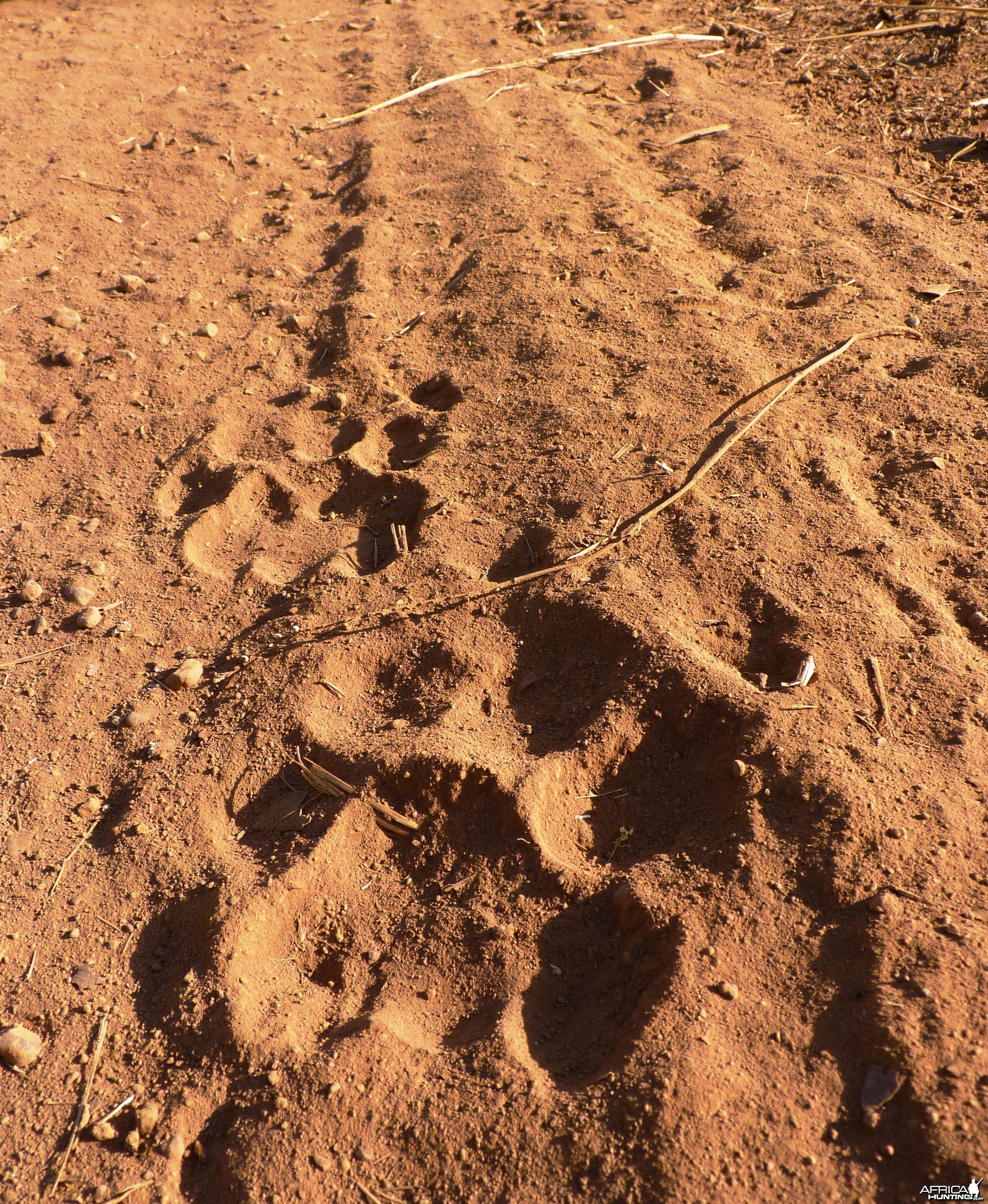 Lion Track CAR