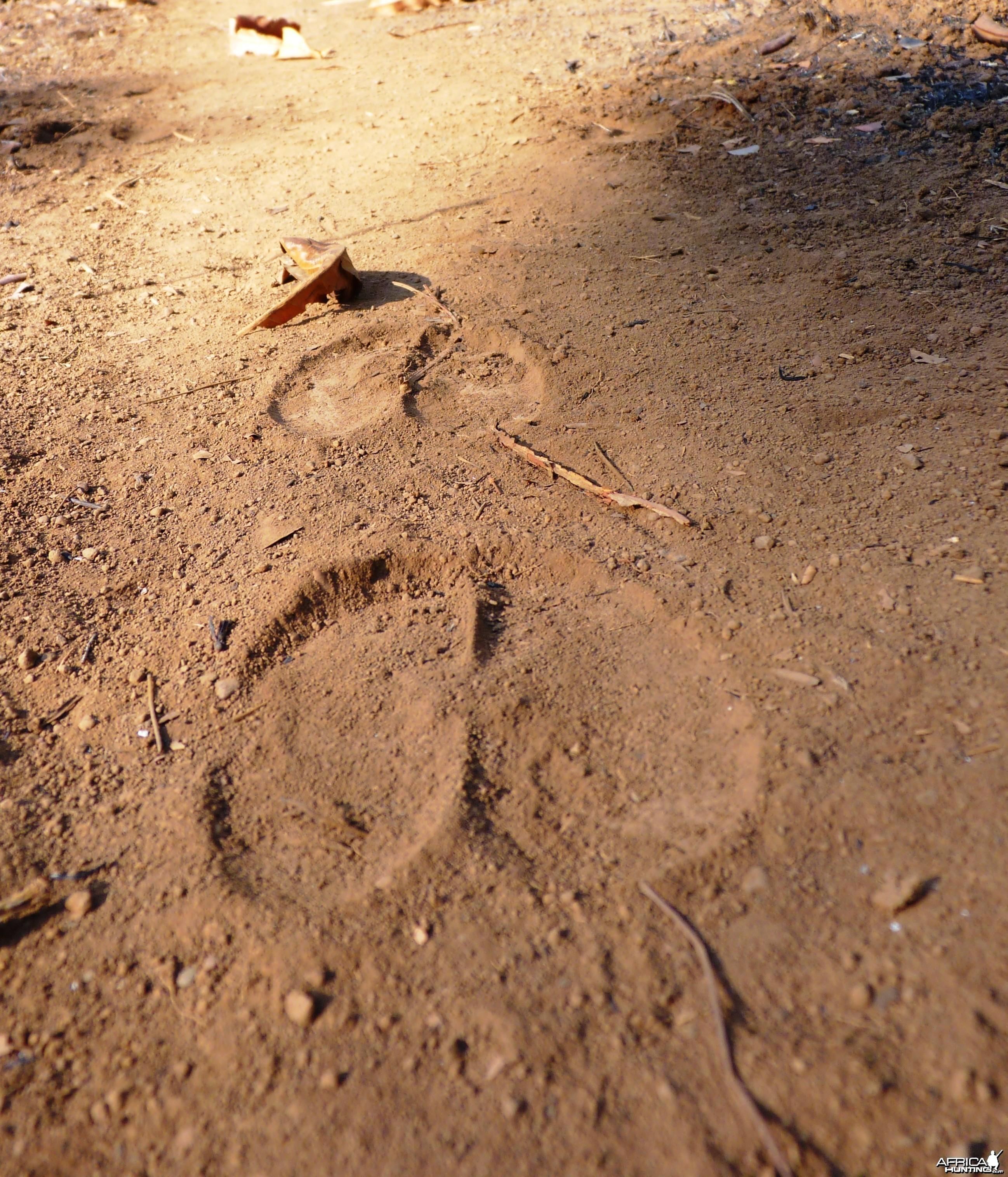Lord Derby Eland Track
