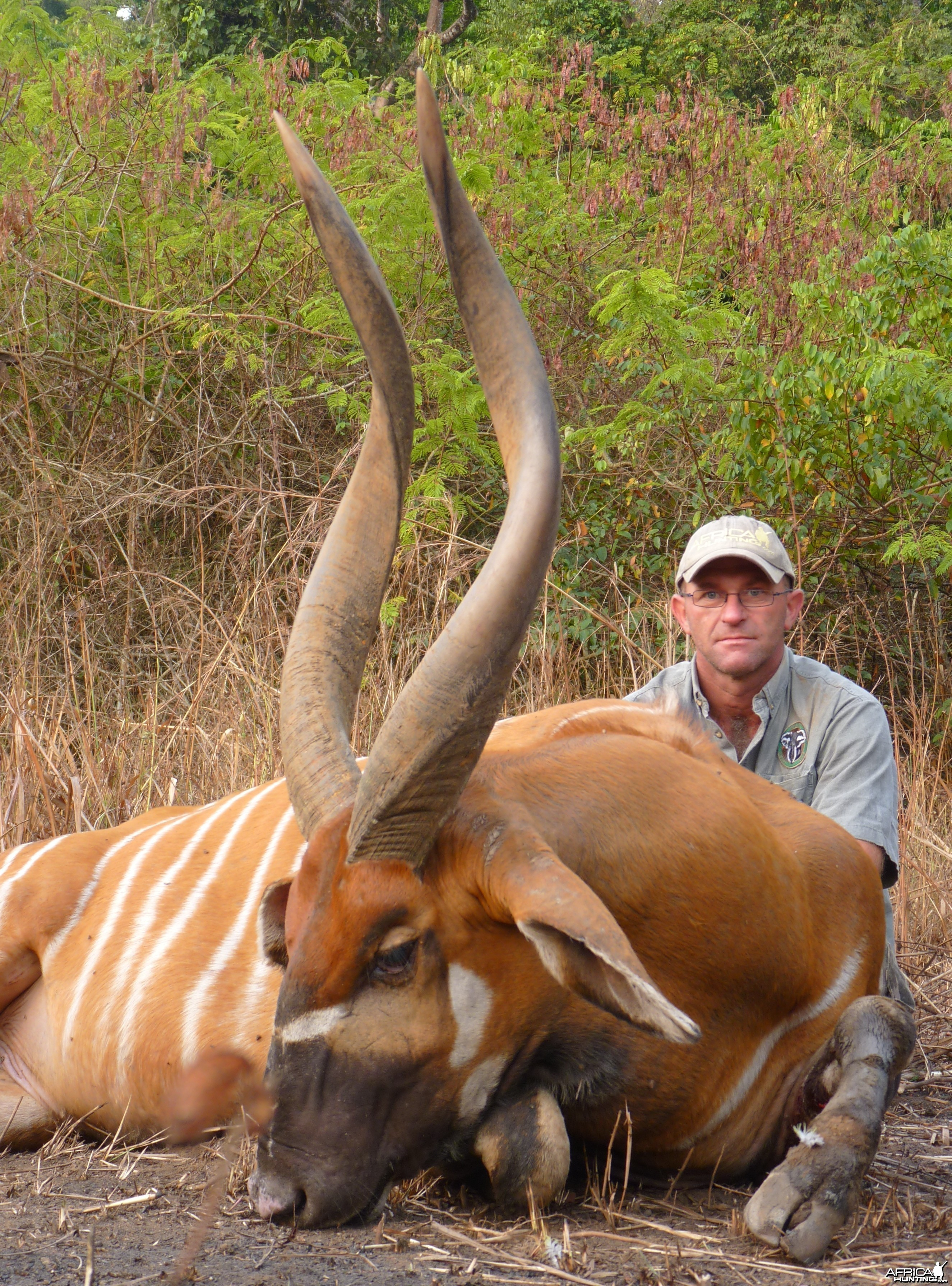 Hunting Bongo in Central African Republic