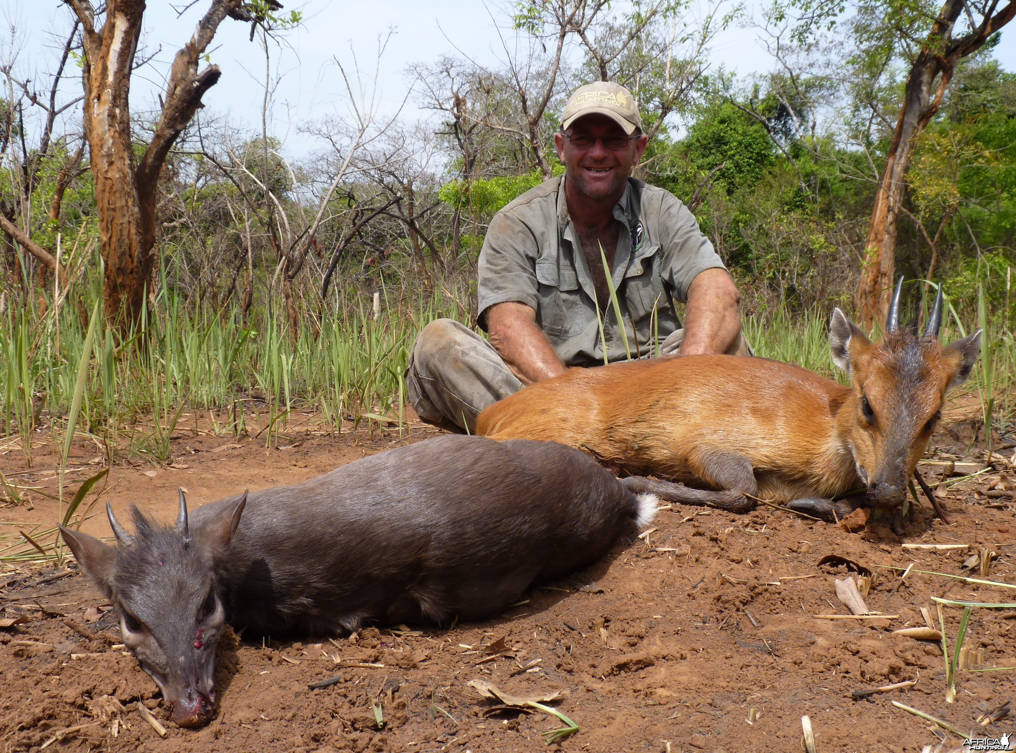 Hunting Blue and Red Flanked Duiker in CAR