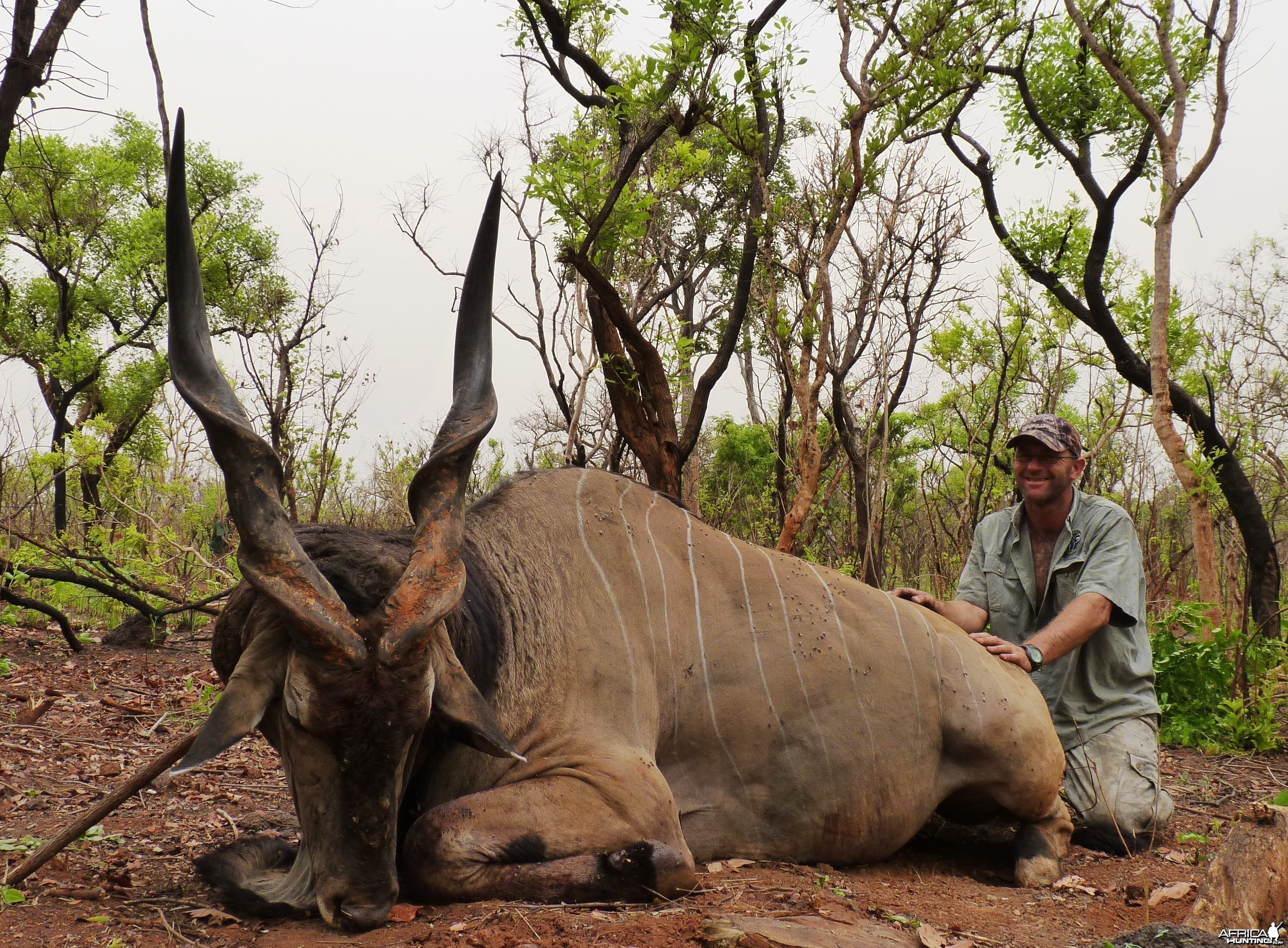 Lord Derby Eland hunted in CAR
