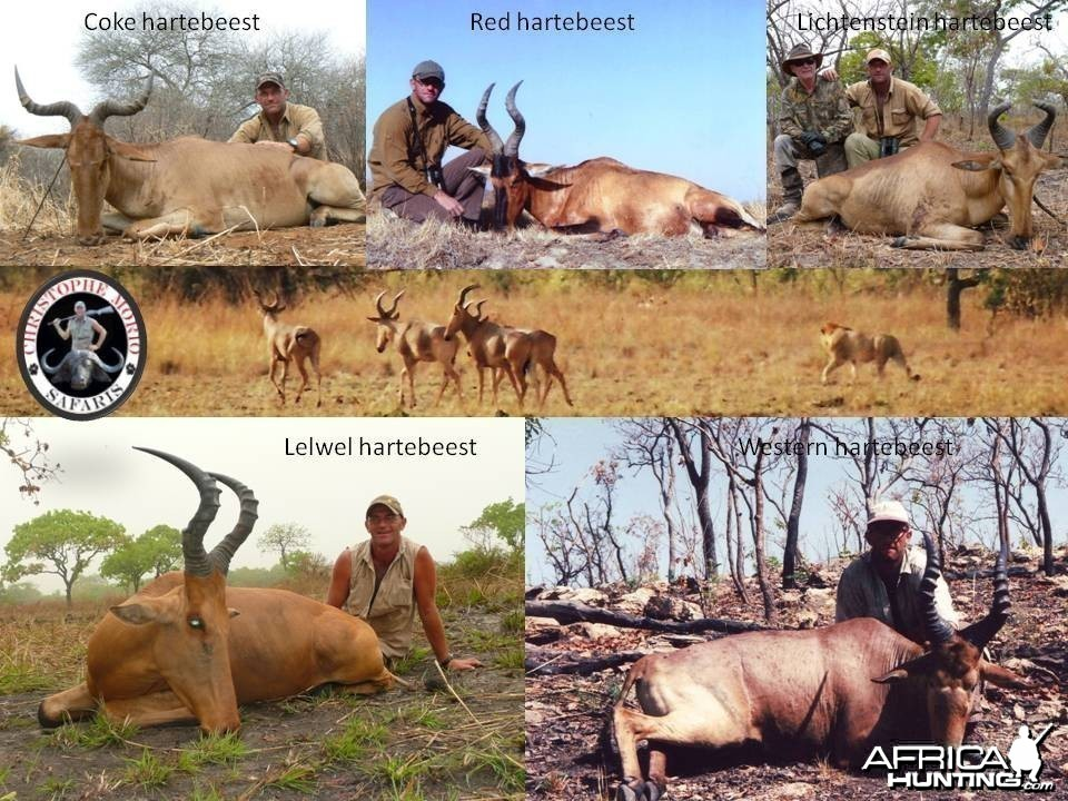 5 out of the 6 species of Hartebeest you can hunt under license