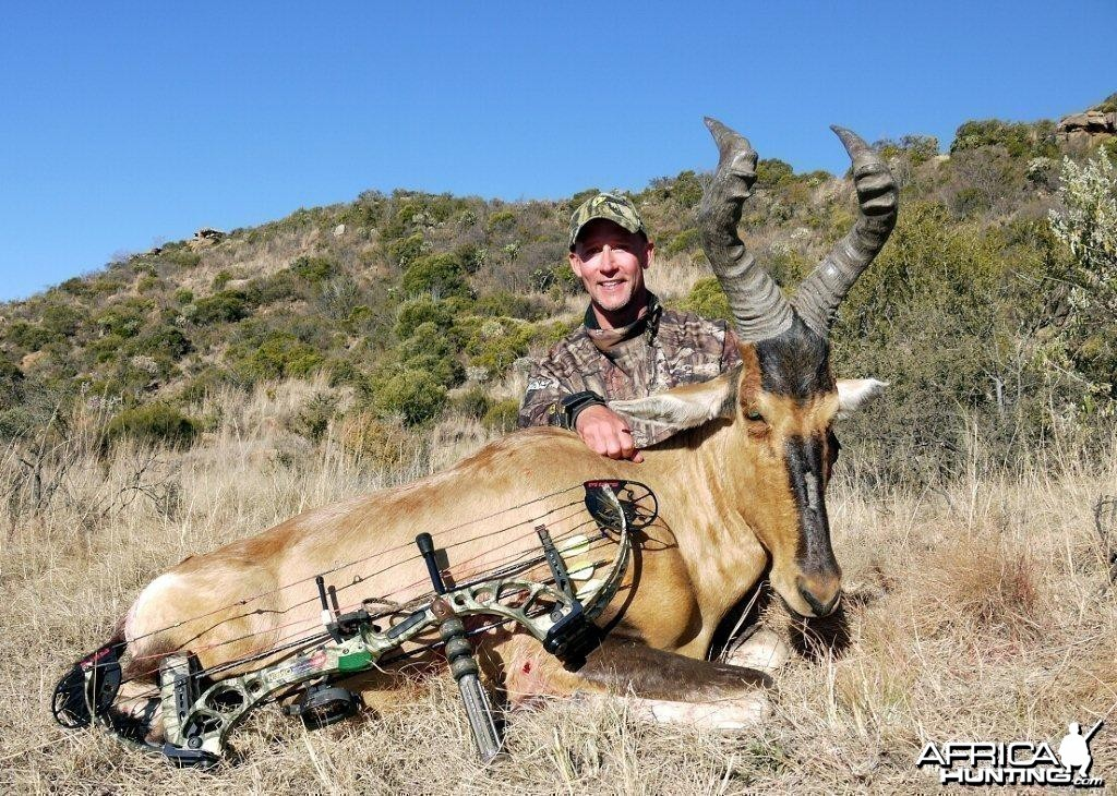 Bowhunting Red Hartebeest with Wintershoek Johnny Vivier Safaris in South A