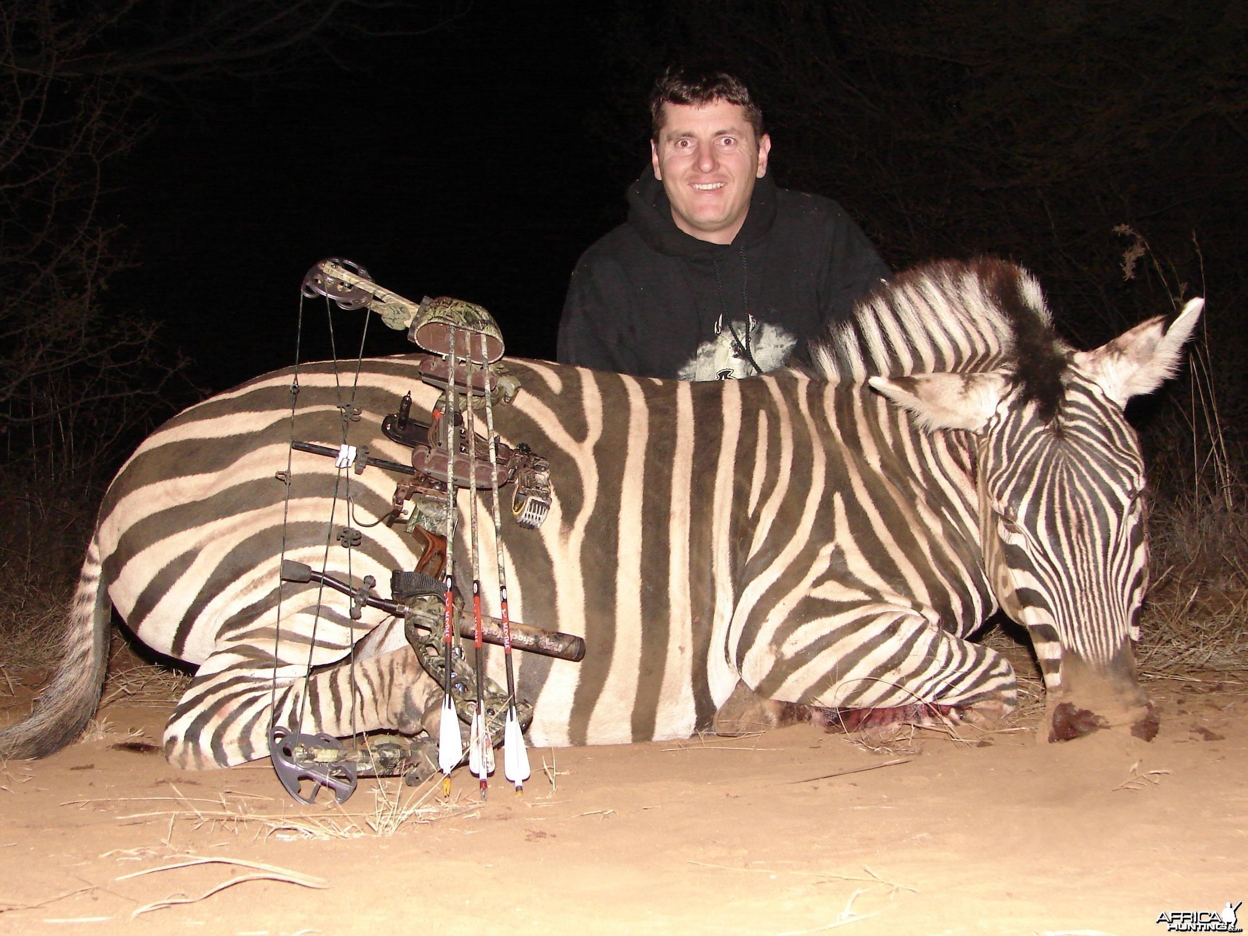 Zebra stallion