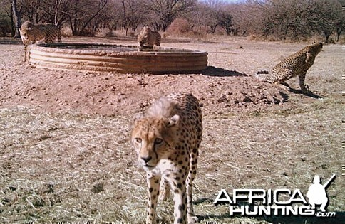 SDudla Game Cam Photos