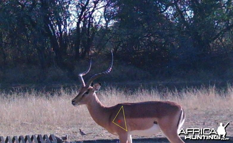 S'Dudla Game Cam Photos