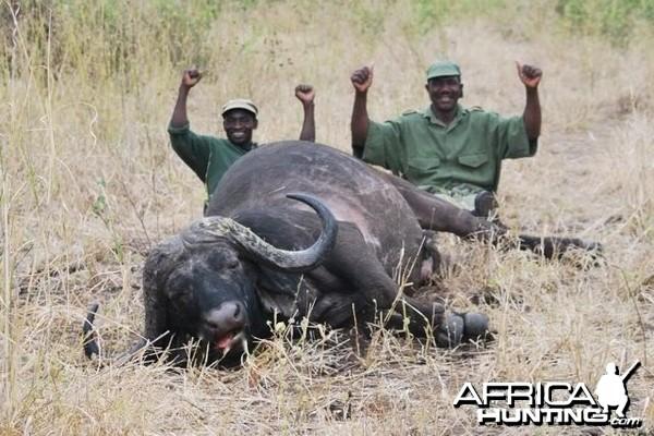42 inch Buffalo hunted in Zimbabwe with Pelandaba Safaris