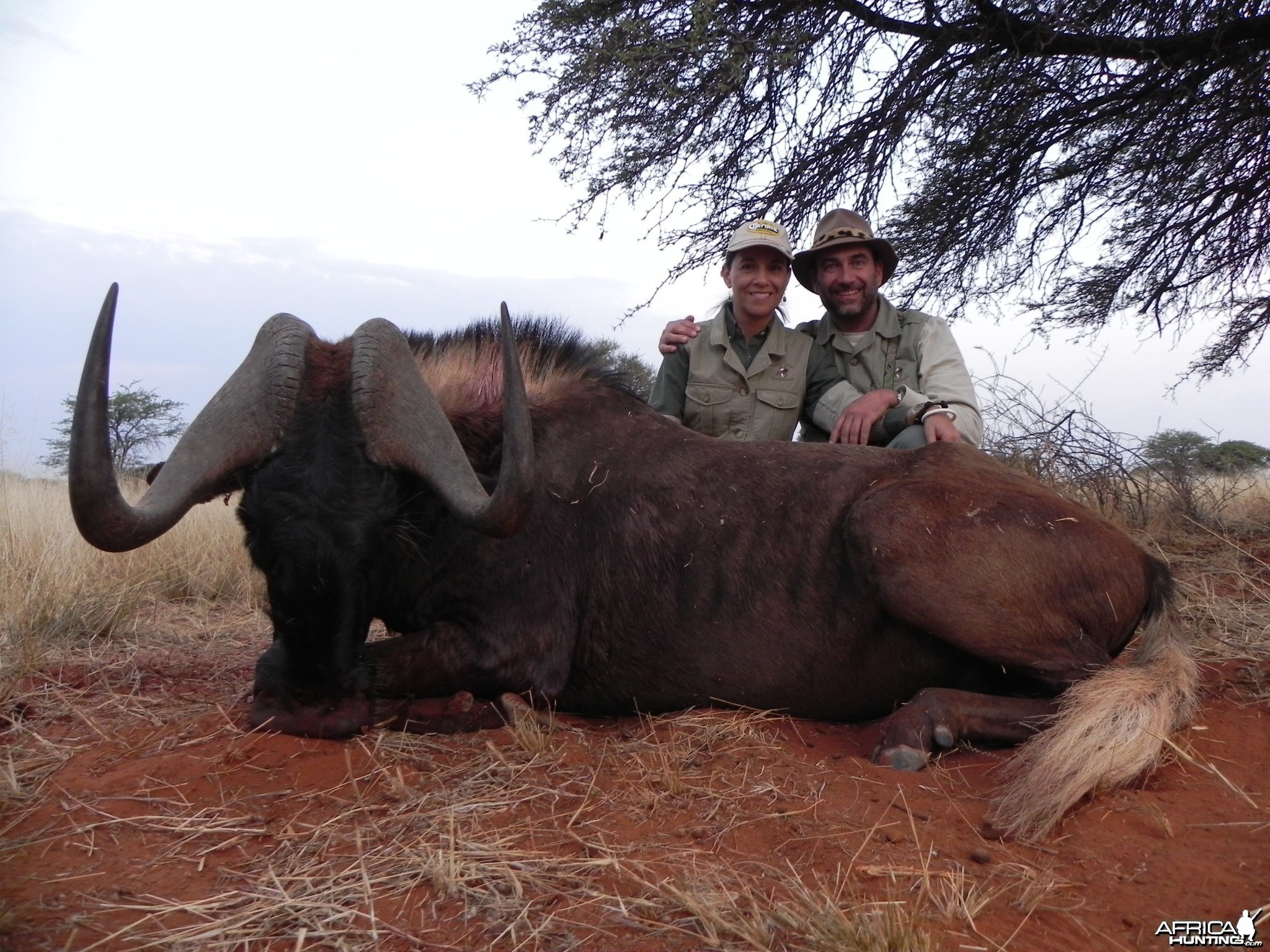 Hunting Black Wildebeest with Wintershoek Johnny Vivier Safaris in SA