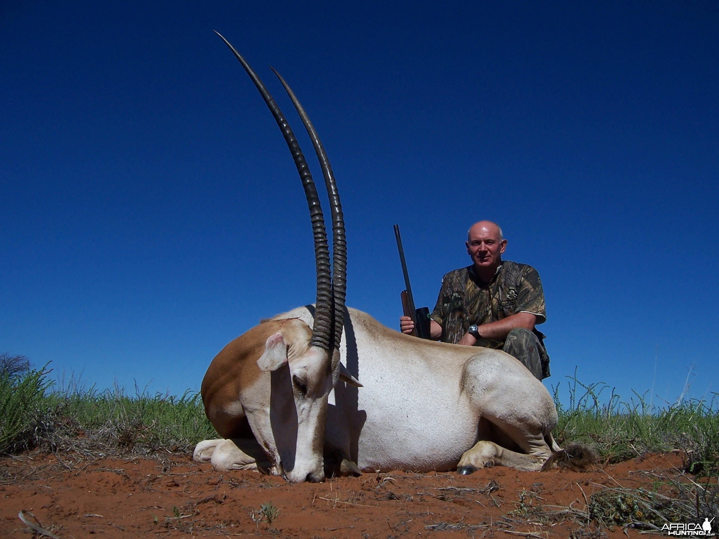 Hunting Scimitar Oryx with Wintershoek Johnny Vivier Safaris in SA