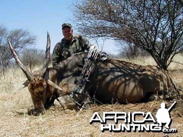 Bow Hunting Cape Eland in Namibia