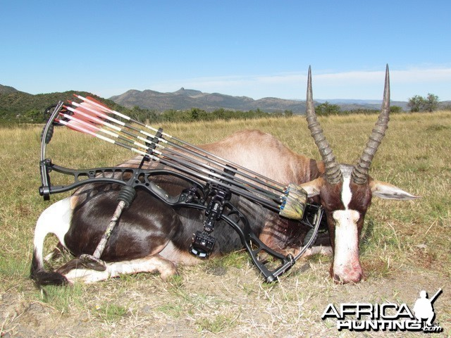 Bowhunting Bontebok in South Africa