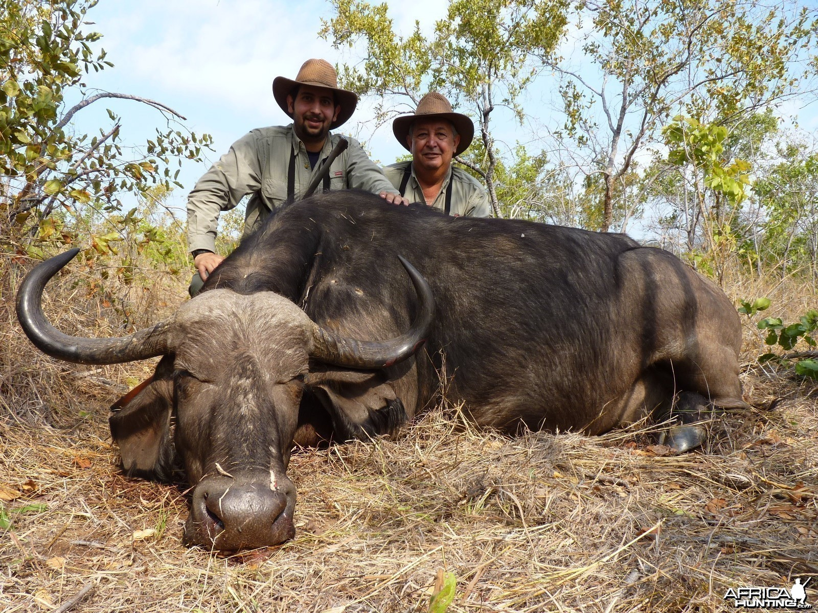 Hunting Buffalo Cow with Wintershoek Johnny Vivier Safaris in SA