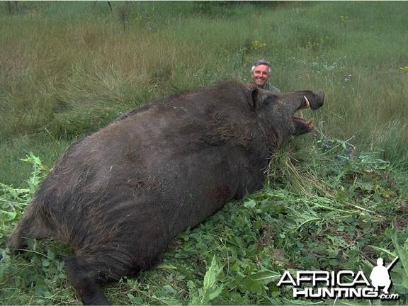 Huge Wild Boar