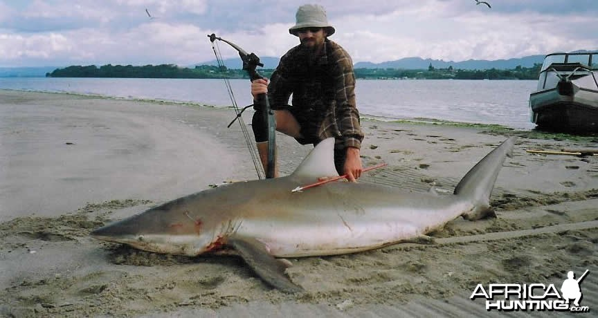 Bowfishing Bronzy Shark in New Zealand