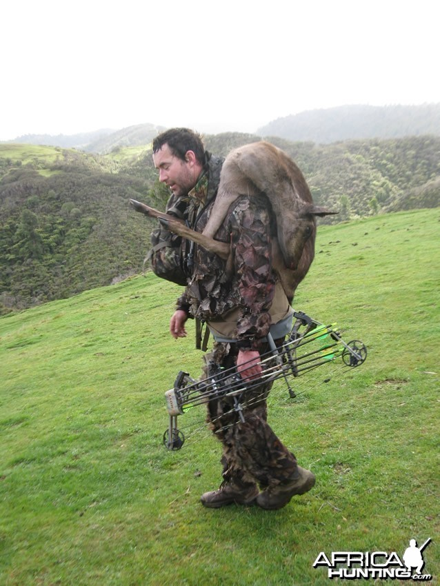 Bowhunting Fallow Deer in New Zealand