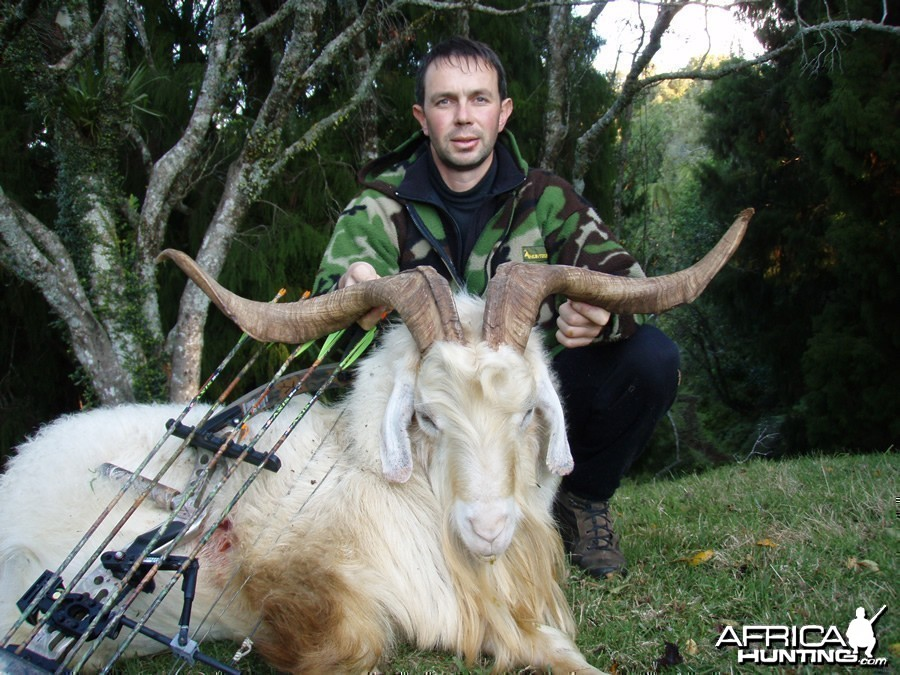 Bowhunting Goat in New Zealand