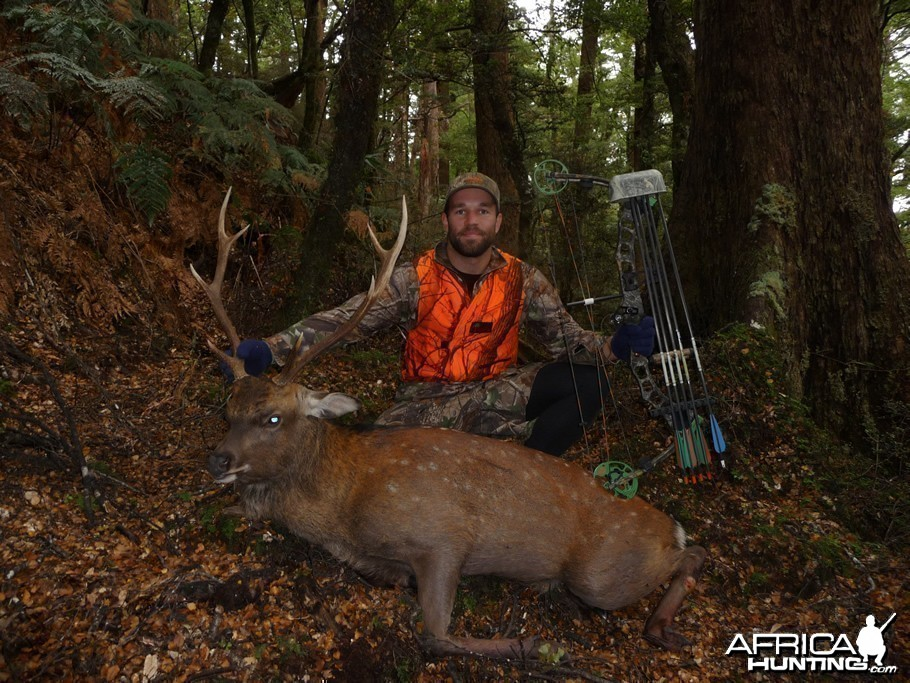 Bowhunting Sika in New Zealand