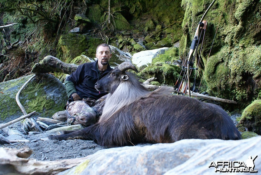 Bowhunting Tahr in New Zealand
