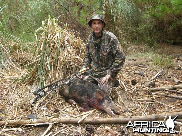 Bowhunting Pigs