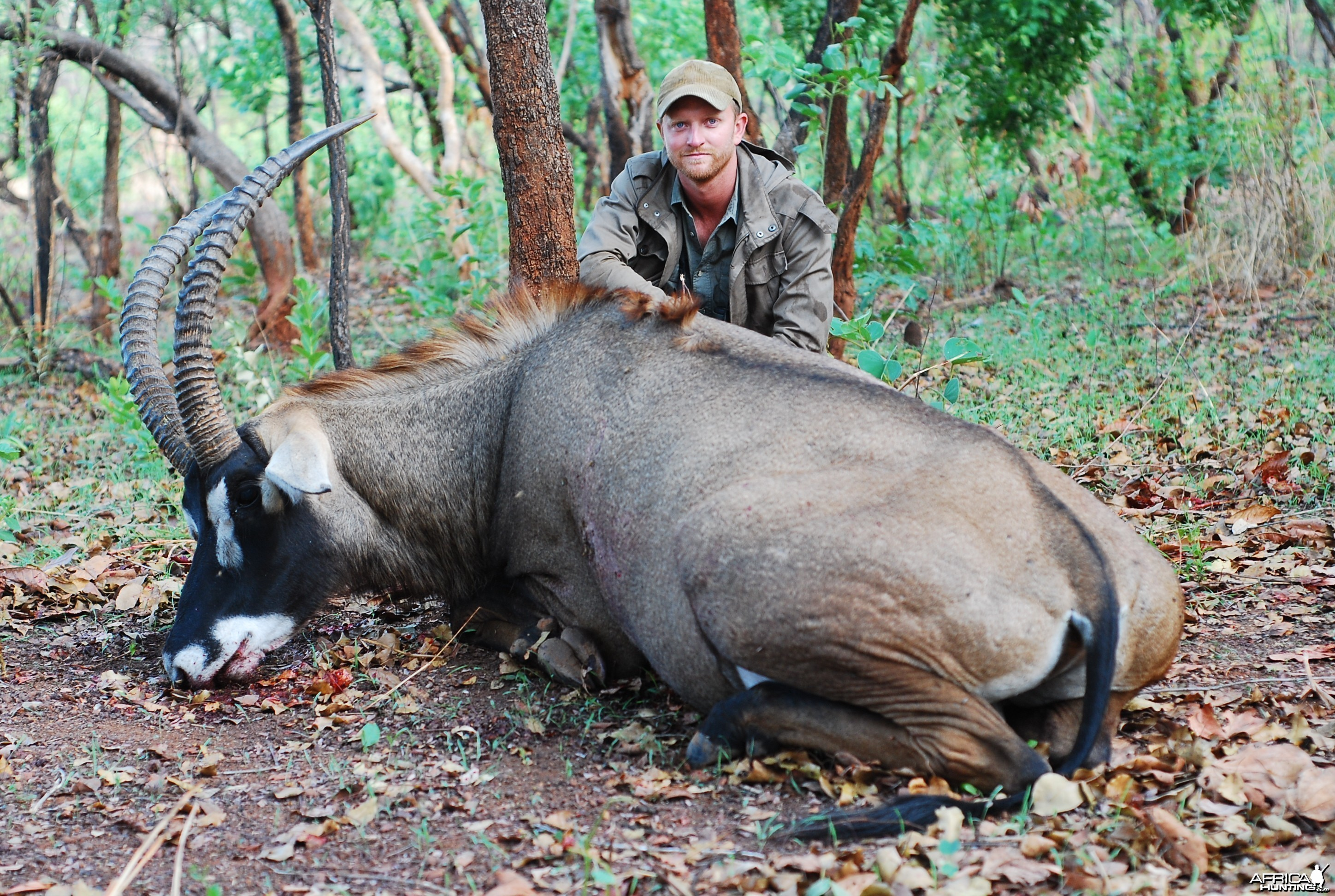 Western Roan hunted with CAWA-Safari, CAR 2011, 32 inches
