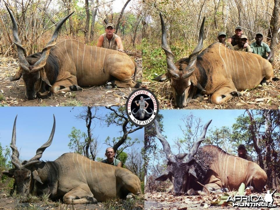 Trophy Lord Derby Eland Bulls